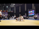 Abdulbari Guseinov brown belt Alexander Keller brown belt 1 8 final