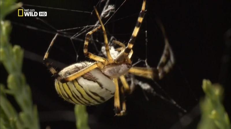 Супер паук (2012)