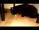 Сахар 17 коты и огурцы