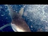 Битва за рыбку