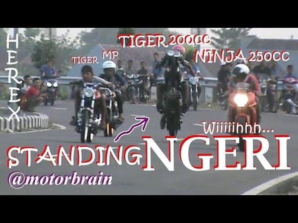 TIGER GENDENG ! STANDING TEGAK, NINJA 250cc AMBLAS, SIRKUIT DRAG HEREX MOJOAGUNG MERADANG