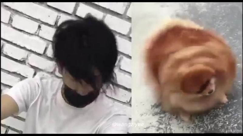 Puppy wang ziyi