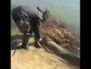 Так поступают настоящие рыбаки (VHS Video)