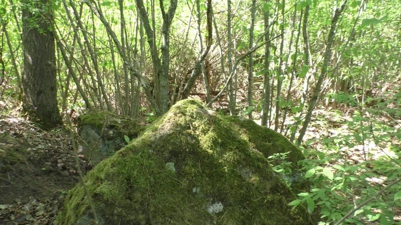 Сморгонь. Лес-8 (Дискордия). Первая траншея по сев. краю леса . Часть 6