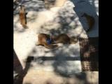 Тренировка команды мангустов