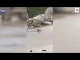 The-worlds-most-romantic-penguins-Birds-appear-to-enjoy-a-romantic-walk