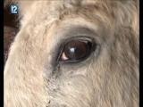 В Любинском районе обсуждали, что делать с инфекционной анемией лошадей