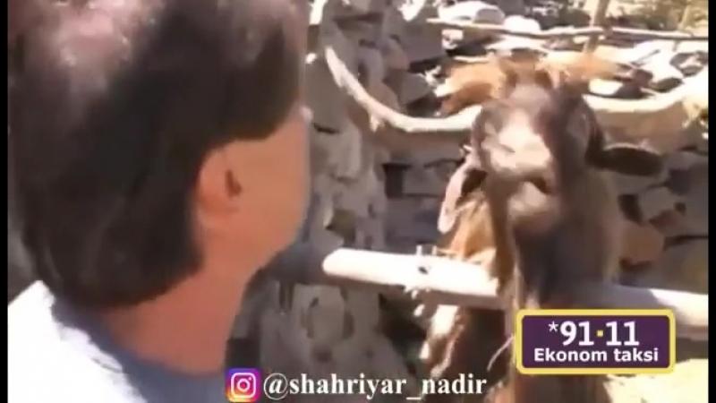 Разговор с козлом