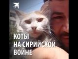 Коты на сирийской войне