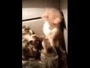 котенок и утята
