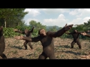 Coldplay - Homo sapiens of the hominid family