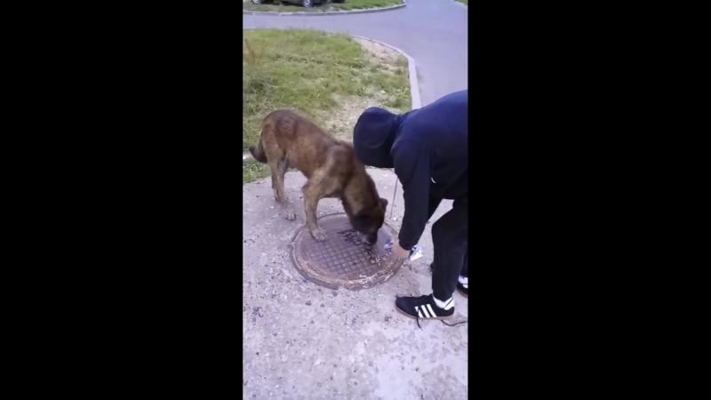 Кормил собачку