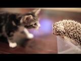 Котя и ежик | Mews News | Котоновости