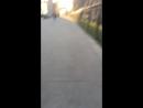 Лось гуляет по ленинградке