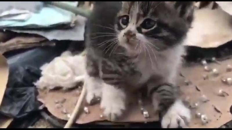 Syria: Syrian army rescue two scared kitty from Yarmouk