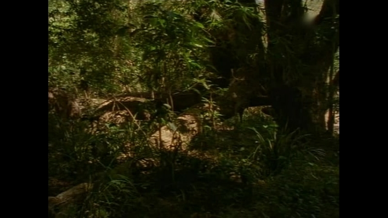 Девочка и океан 4 сезон 19 серия (1997)