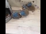 Мимимишные ёжики