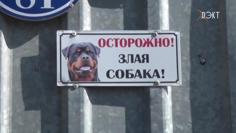 Сосед отбил подростка из пасти собаки в деревне Юрасово