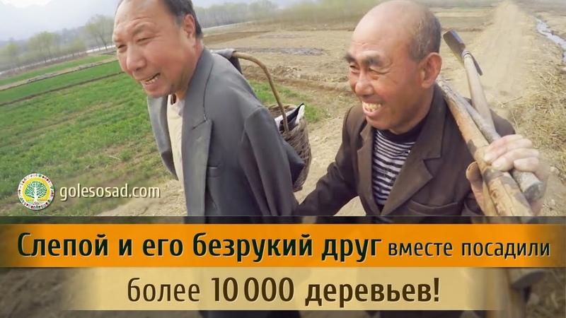 Слепой и его безрукий друг вместе посадили более 10000 деревьев