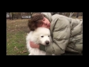 Optimus Gang - Моя любимая собака