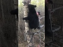 Hunter Experiences Close Encounter With Bear in Tree Stand - 989387