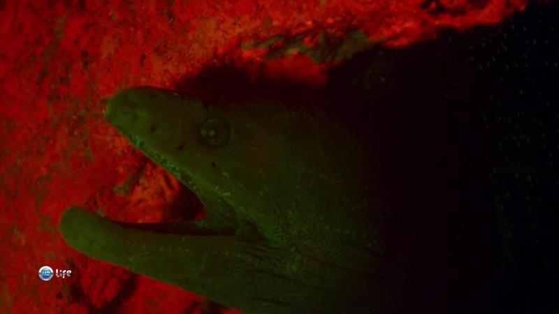 BBC Миссия Галапагос 03. Будущие рубежи 2017