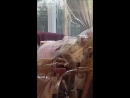 Dog licks and bites at glass door to be let in