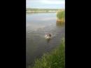 Splash doggo