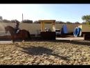 Продажа лошади из Испании есть доставка