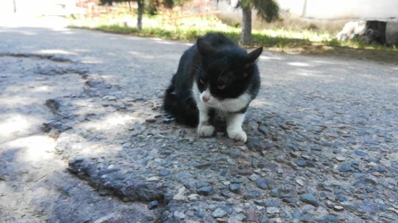 Кошка. Боевик. Часть 2