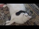 Прикольные кошки Смешные кошки
