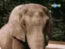 к-ф Боба и слон (1972) - Дима и Ира Кирюхины - Розовый слон