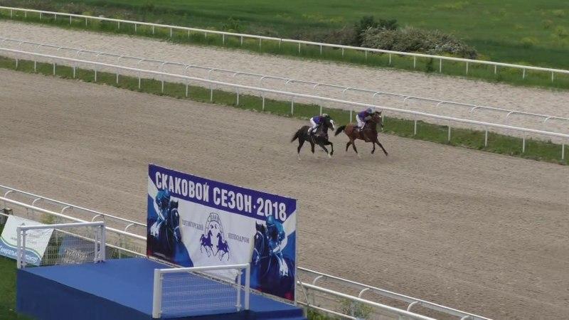 20.05.2018 - Приз Мелекуша (3 гр.) на лошадях 4-х лет и старше ахалтекинской породы - Рарог