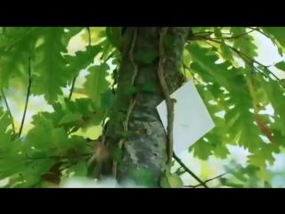 Суруди (Tjk) Ман пушти дарам ту шиштаи дар хона 2017