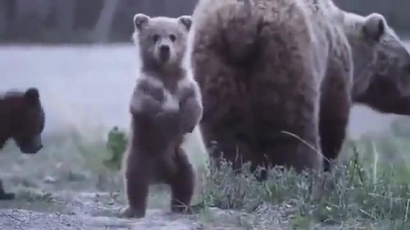 Иди я тебя с мамой познакомлю.....иди....