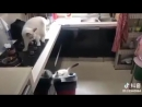 Котенок стал звездой YouTube, приземлившись в мусорное ведро