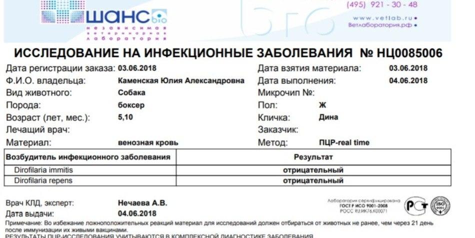 Москва, Дита, сука, 19.08.16 -3cG1fISl1Y