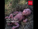 పంది కడుపున మనిషి Viral: Pig in Muranga Gives Birth to Human Like Creature