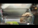 Красивая подача - Тигровые креветки в тесте катаифи с соусом васаби