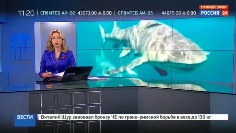 Новости на Россия 24 • Австралиец чудом уцелел после попытки заарканить акулу