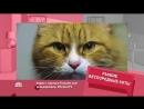Рыжие беспородные коты