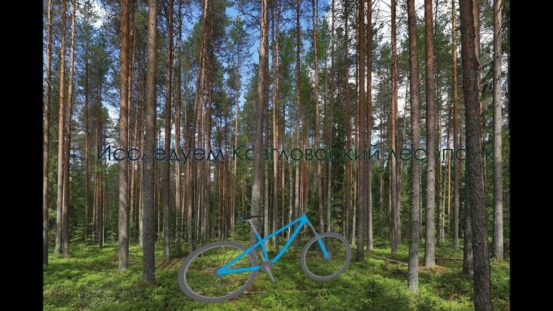 Покоряем вершины Кавголовского леса