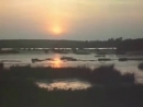 Мария Пахоменко Бежит река