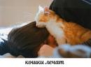 Кошачье мурчание способствует заживлению ран. Хотя ученые до сих пор так и не выяснили…