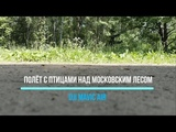 Dji Mavic Air.  Полёт с птицами над московским лесом