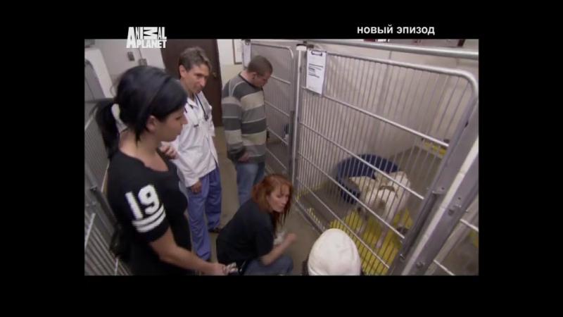 Д/С На свободу с питбулем 12 серия (2010г)