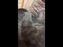 Кот разговаривает😂