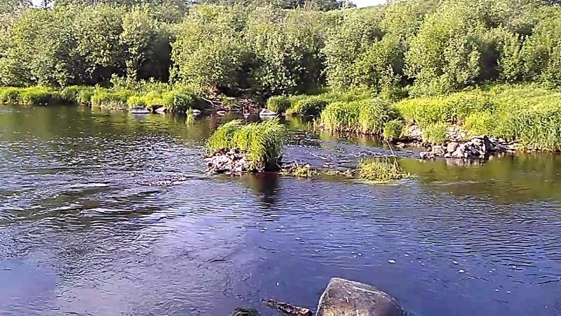 Река - ловля окуня