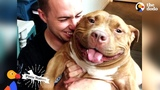 Happy Pit Bull Dog Loves It When His Dad Babies Him The Dodo Pittie Nation