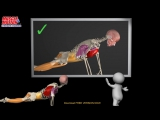 How to do a Proper Push Up- Watch the muscles in 3D  learn to avoid a common mistake.
